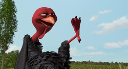 Free Birds Images